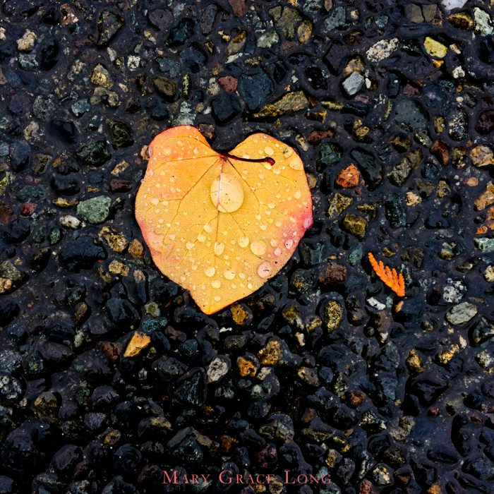 marygracelong-photography-seattle-rain-heart