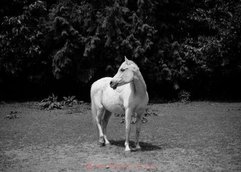 photograph_seattle-marygracelong.com